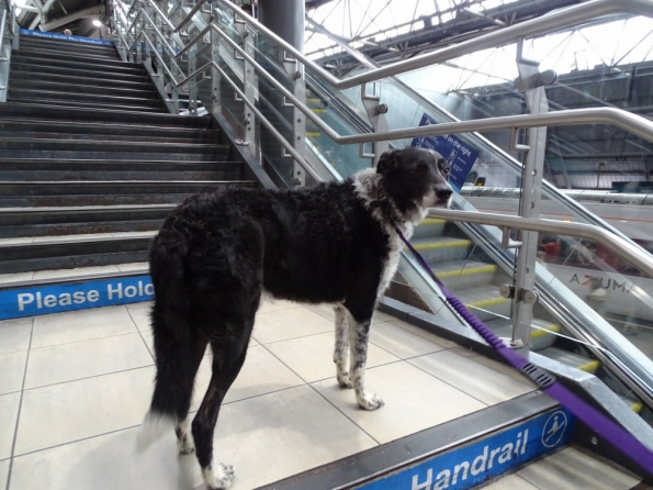 Cooper at Leeds railway station